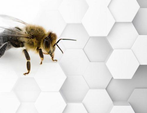 ¿A qué se debe la disminuyendo de las abejas? Estos chilenos lo explican