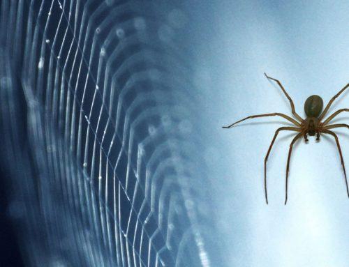 Científicos chilenos descubren 3 nuevas arañas venenosas